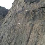bighorn on cliff unedited